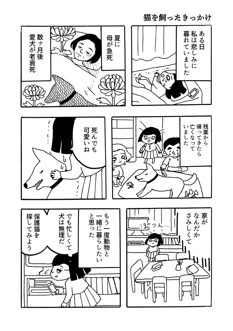 キジトラ保護猫日記3