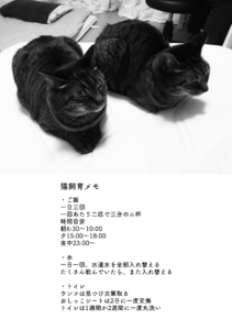 キジトラ保護猫日記8