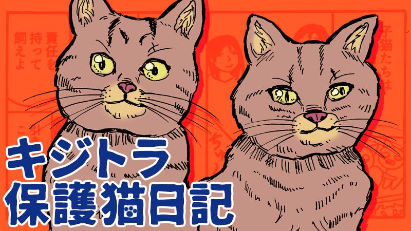 キジトラ保護猫日記アイキャッチ